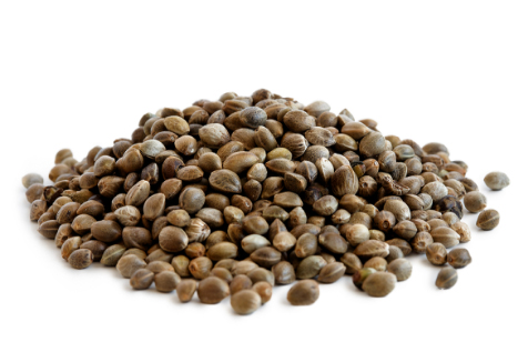 Hemp Genetices - Hemp Seeds